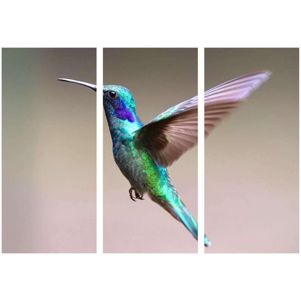 Quadro beija-flor passaros decorativo