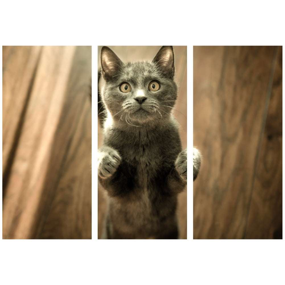 Quadro gato filhote pet decorativo