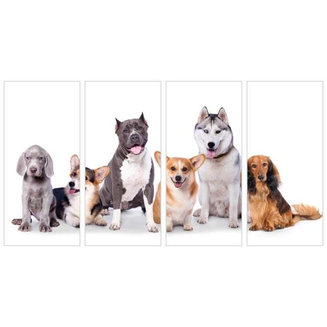 Quadro pet cachorros decorativo