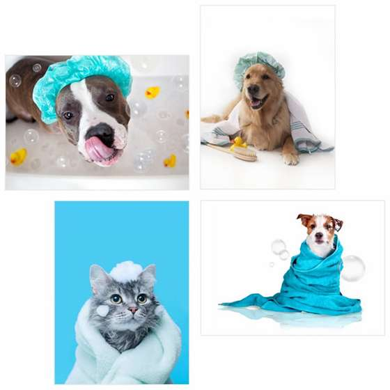 Quadro animais banho pets turquesa decorativo