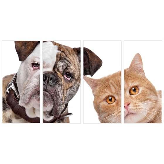 Quadro bulldog gato pets animais decorativo