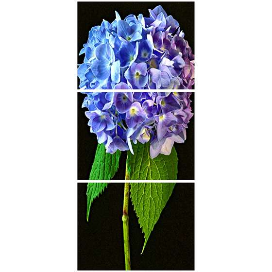 Quadro flor lilas decorativo