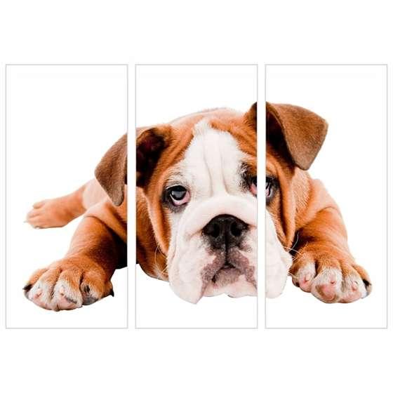 Quadro pet bulldog ingles filhotes cachorro decorativo