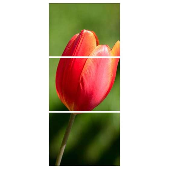 Quadro tulipa vermelha flor decorativo