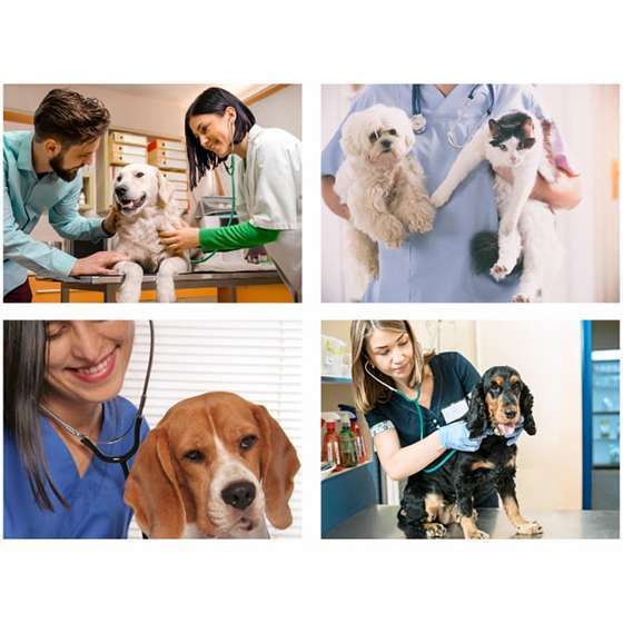 Quadro veterinario profissão animais pet shop decorativo
